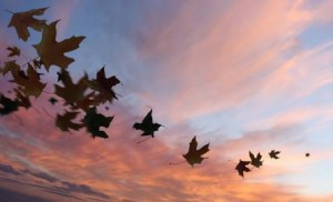 Autumn leaves sunset sky