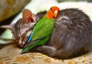 cat&bird