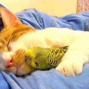 cat&bird2