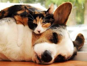 cat&dog3