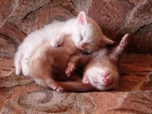 cat&possum