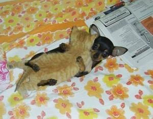 dog&cat2
