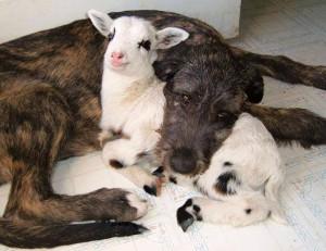 dog&goat