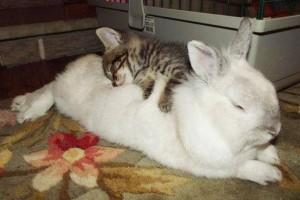 rabbit&cat