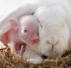 rabbit&piglet