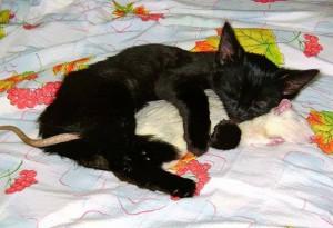 rat&cat2