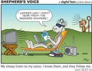 shepherd voice